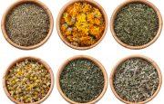 Amazon Rainforest Herbs