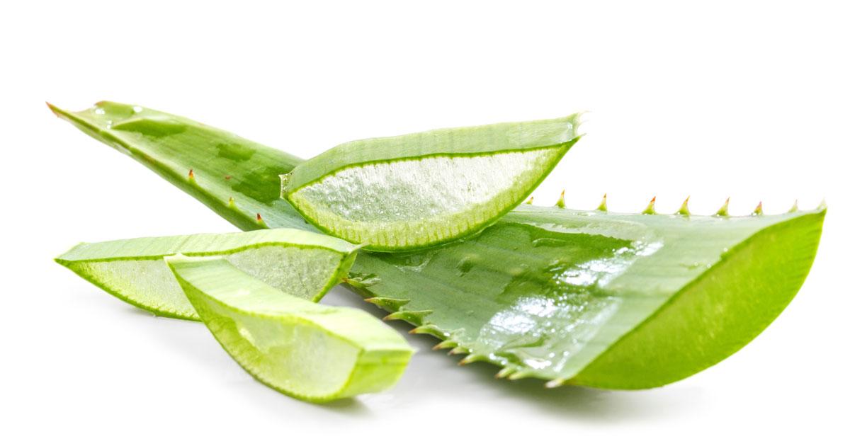 Psoriasis Herbal Remedies